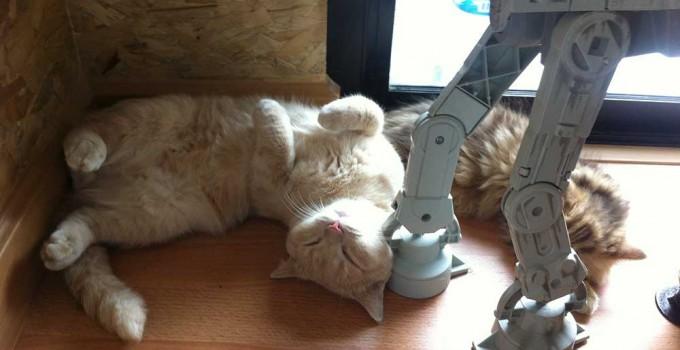 CatCafeFeatured