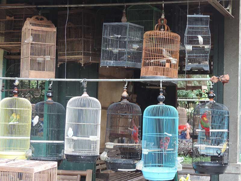 BirdMarket1