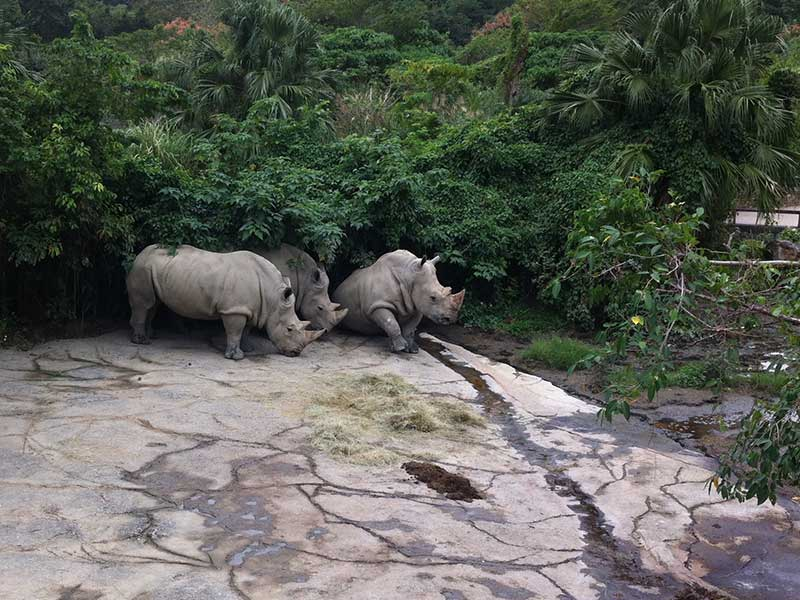 Rhinos at Taipei Zoo
