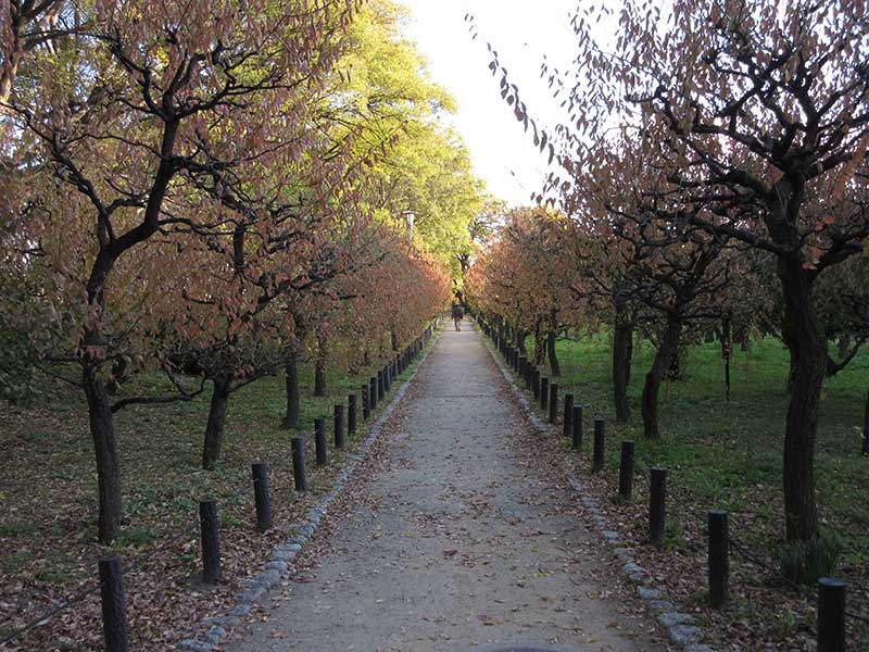 OsakaCastleTrees
